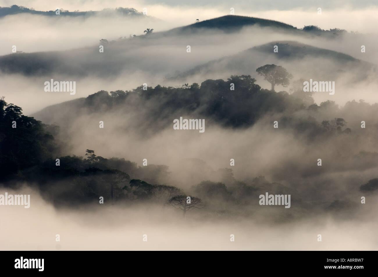 La foresta pluviale tropicale nel Soberiana Parco Nazionale visto all'alba dalla tettoia Torre eco-lodge Panama Immagini Stock
