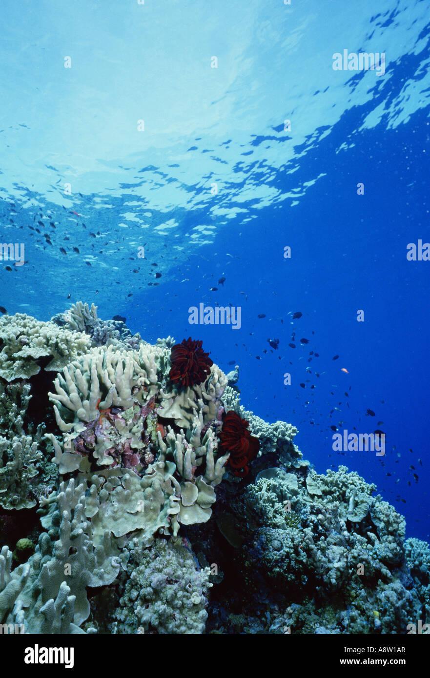 Il viaggio Papua Nuova Guinea Coral reef Underwater Immagini Stock