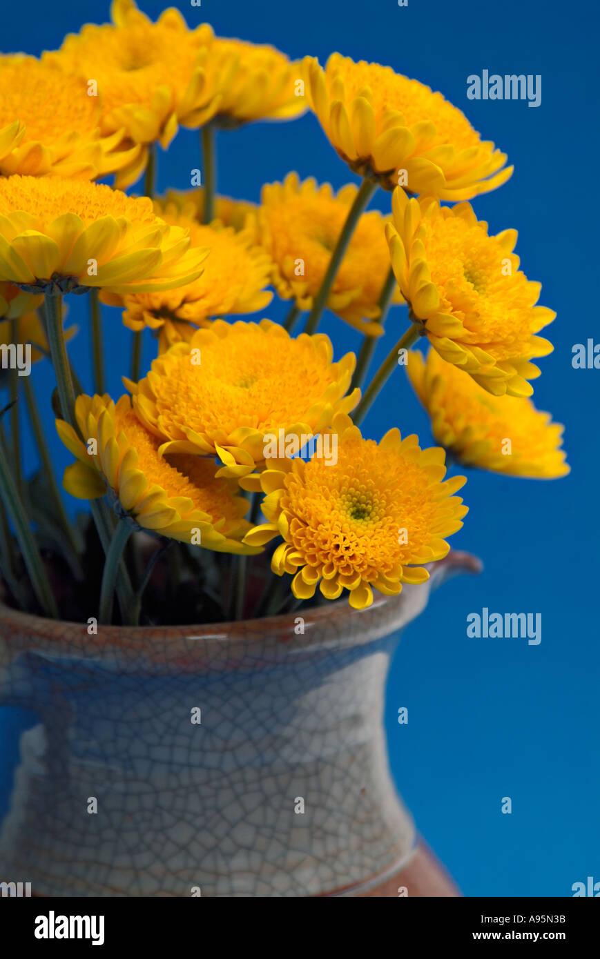 Fiori Gialli In Vaso.Vaso Di Fiori Gialli Contro La Parete Blu Foto Immagine Stock