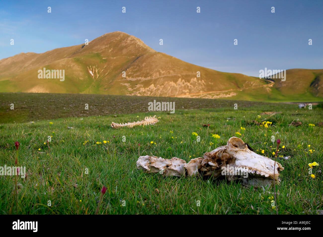 Campo Imperatore nel Parco Nazionale del Gran Sasso in Abruzzo Italia Immagini Stock