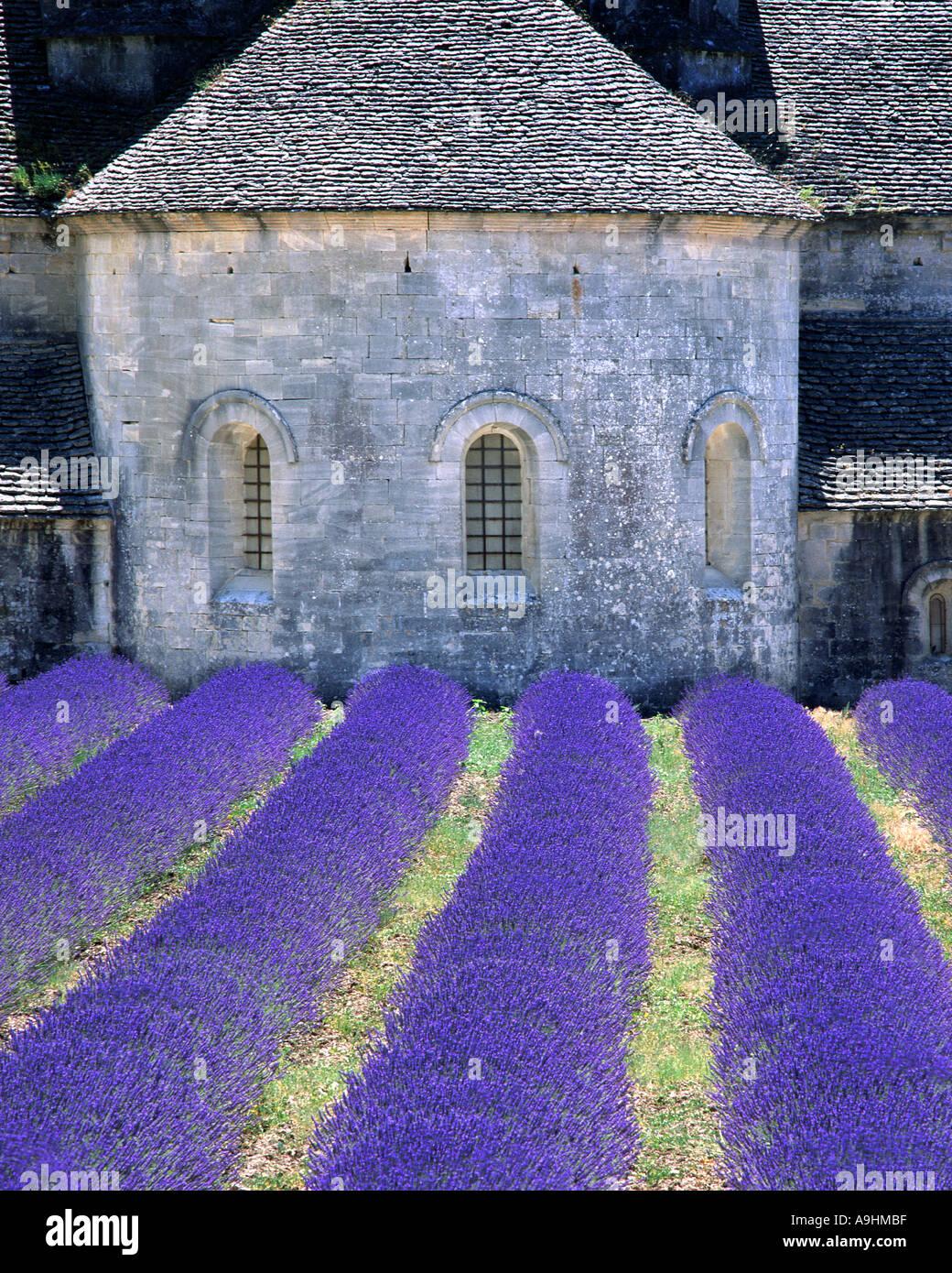 FR - Provence: Abbaye de Senanque vicino a Gordes Immagini Stock