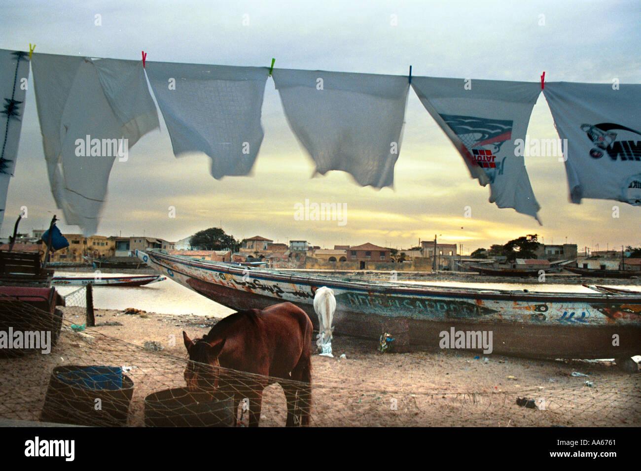 Commercianti senegalesi alimentano i loro cavalli a sunrise prima che i pescatori locali hanno portato nei giorni raccolto nella cittadina di St Immagini Stock