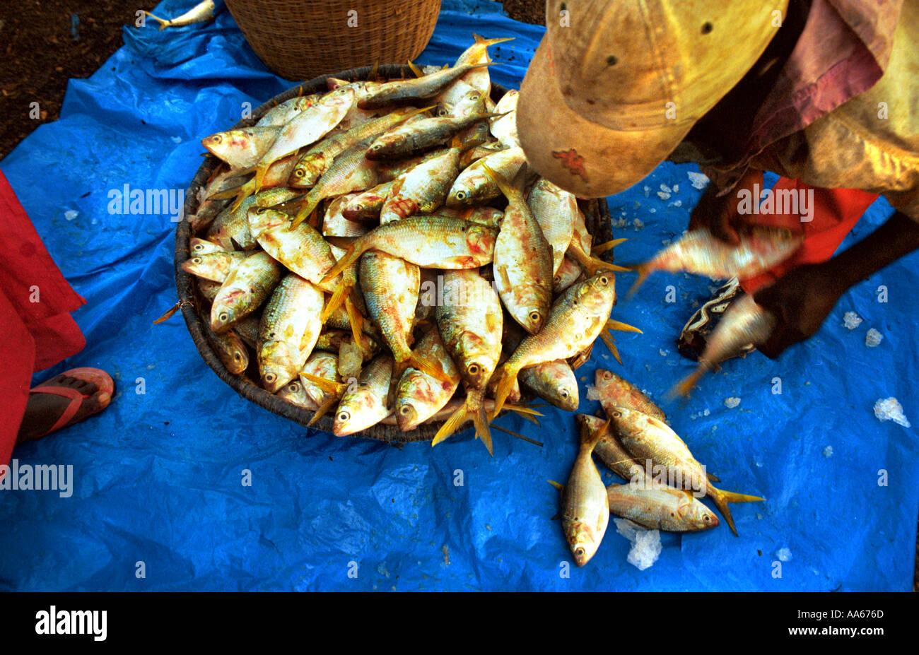 Locali e della Mauritania pescatori senegalesi portare nei giorni raccolto nei pressi della capitale Nouakchott in Mauritania Africa occidentale Immagini Stock