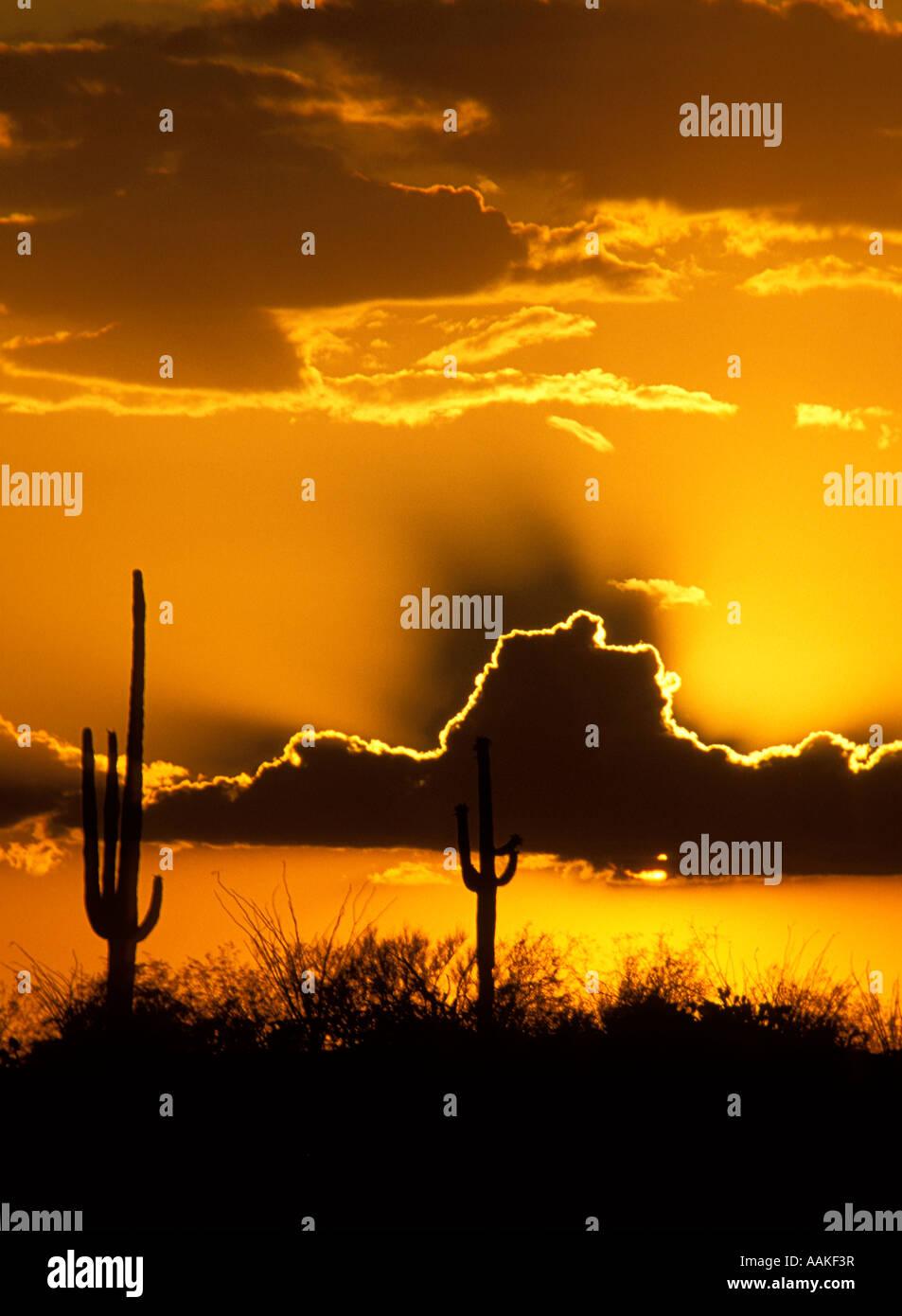 Tramonto spettacolare nel parco nazionale del Saguaro East side Tucson in Arizona Immagini Stock