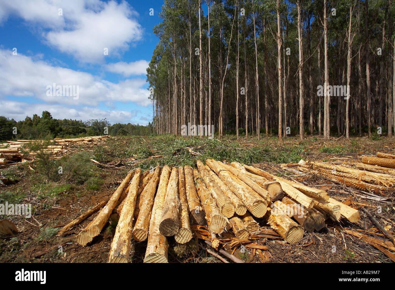 La registrazione della deforestazione nr Yolla Cam vallata a nord ovest della Tasmania Australia Immagini Stock