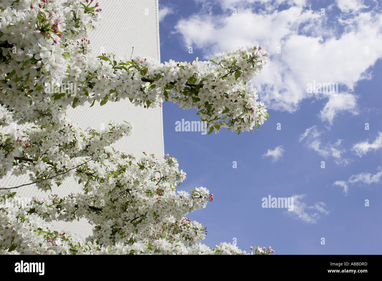 Primavera edificio Sky fiorisce sul ramo di albero in primavera i fiori Immagini Stock