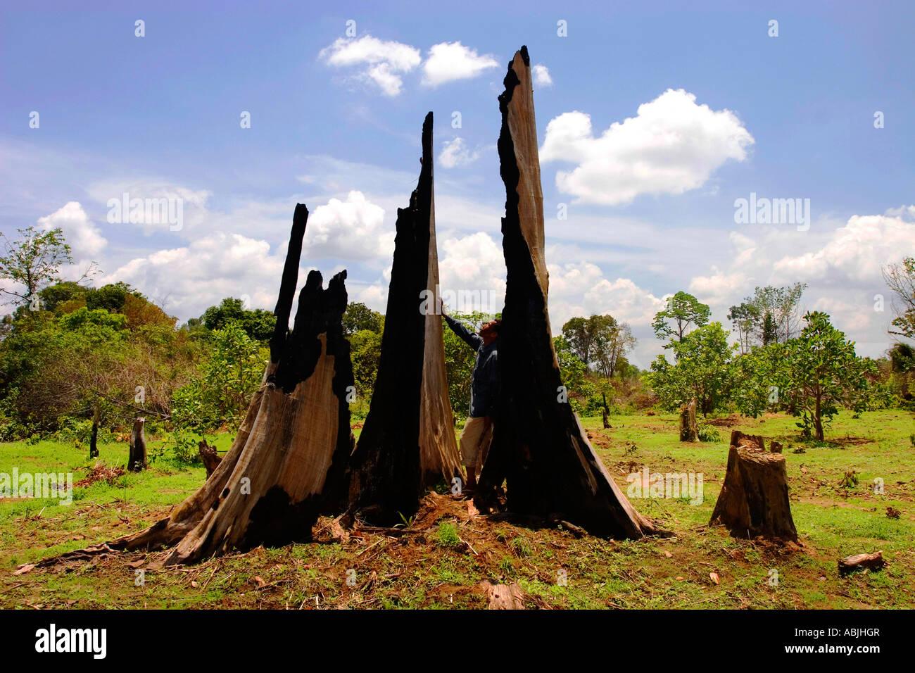 Laos soffre di una serie di problemi ambientali, i più importanti dei quali sono legati alla deforestazione. Immagini Stock