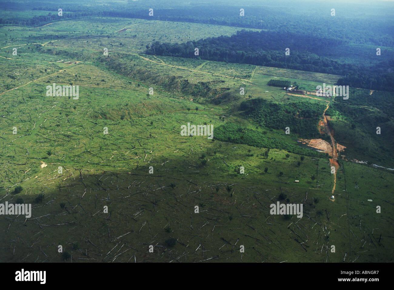La deforestazione o cancellare il taglio delle foreste pluviali del Brasile vicino al fiume del Amazon Immagini Stock