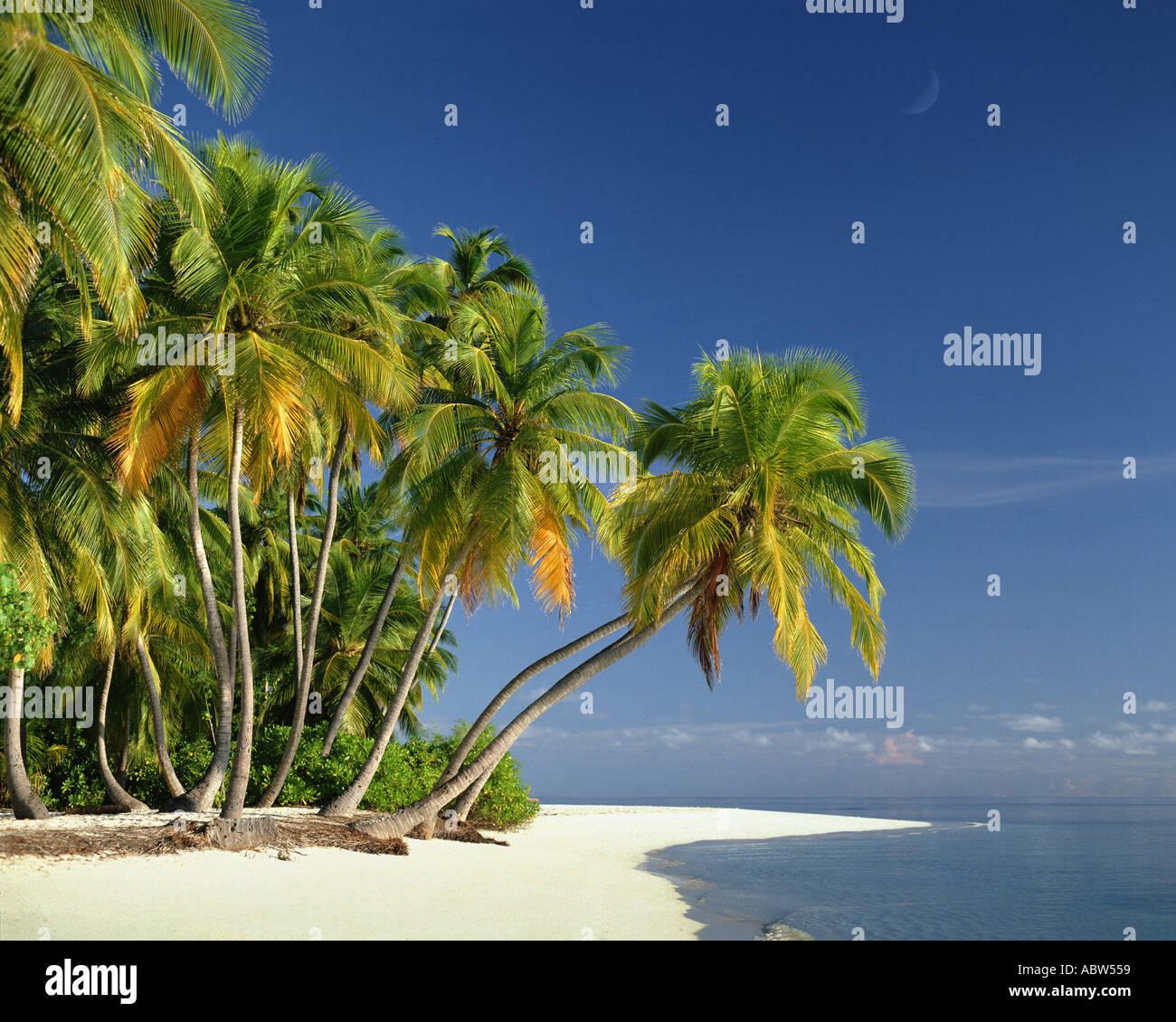 Mv - Maldive: spiaggia lungo l'Oceano indiano Immagini Stock