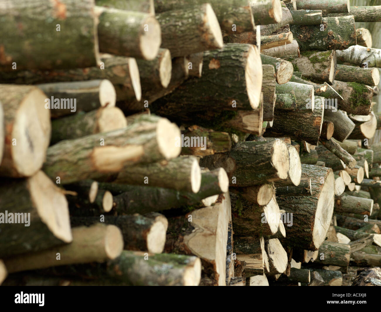 Pila di tronchi Immagini Stock