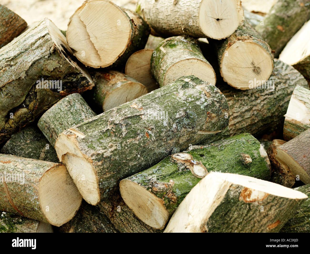 Catasta di tronchi Immagini Stock