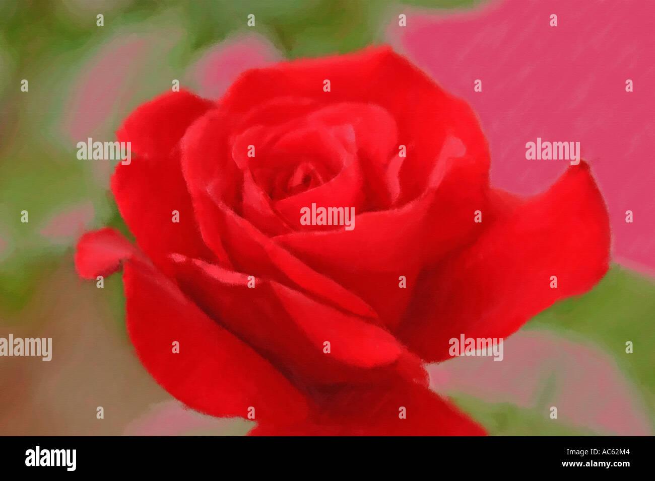 Red Rose come un dipinto ad olio Immagini Stock