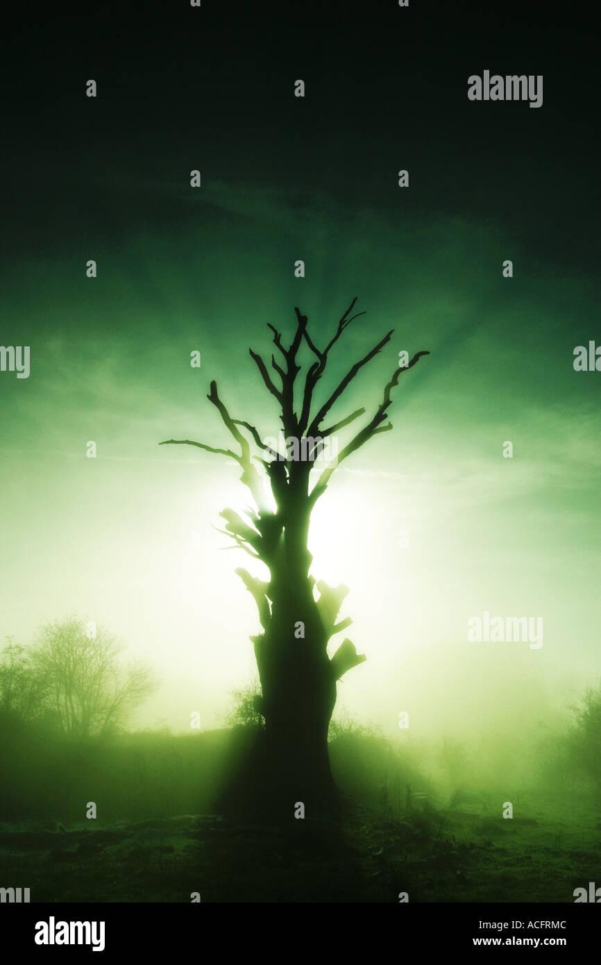 Foto di un albero nella nebbia di mattina Immagini Stock