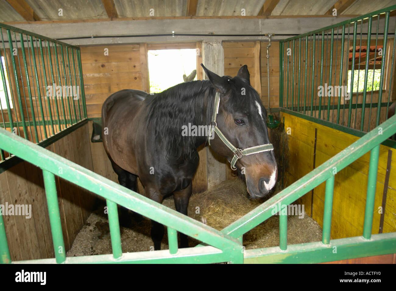 Maneggio e scuola di equitazione a Konavle Valley vicino a Cavtat a sud di Dubrovnik Adria Dalmazia Adriatico Croazia Immagini Stock