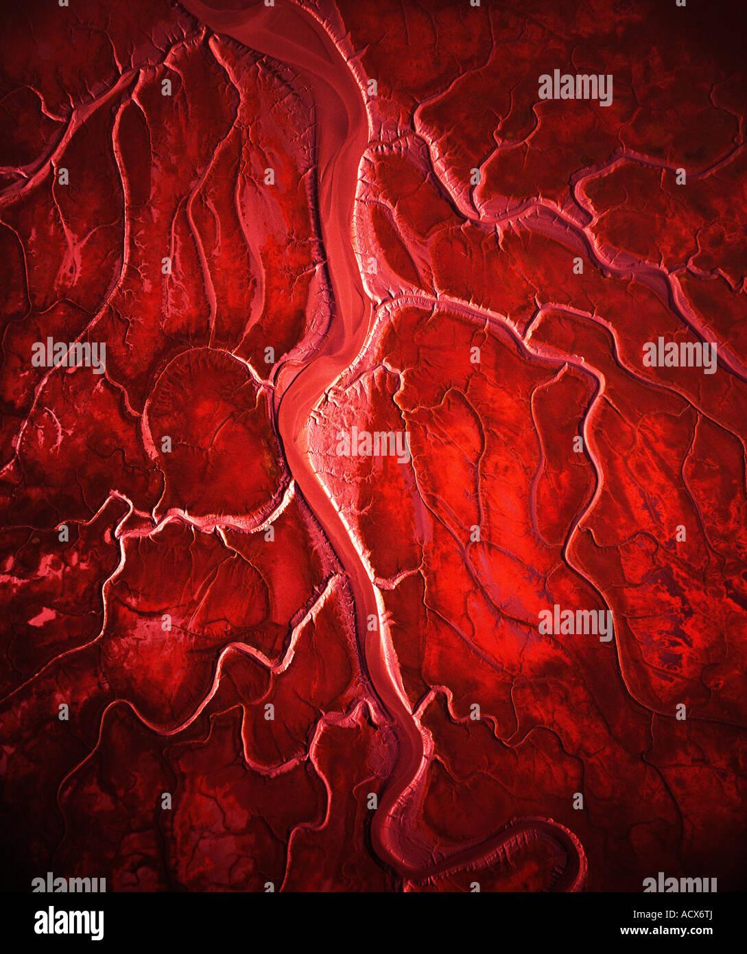 Come le arterie del cuore, il Rivoli di questo mudflat nella baia di Chickaloon sparse fuori da dove il fiume si Immagini Stock