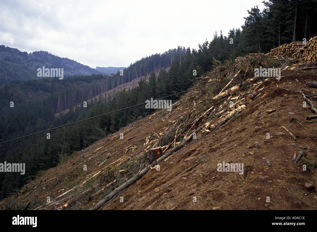 Il Cile la deforestazione nei boschi del sud Immagini Stock