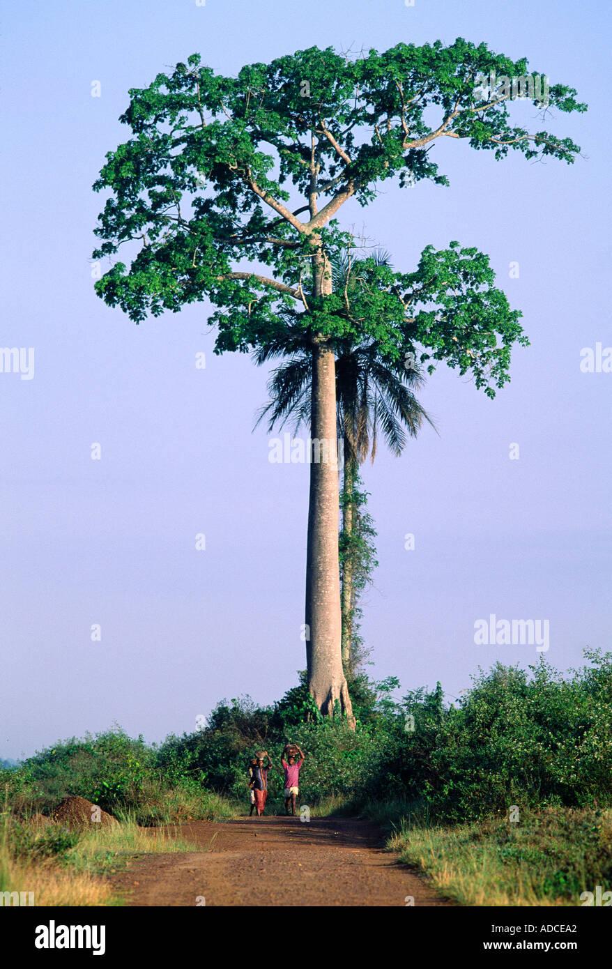 La deforestazione, la Costa d Avorio Immagini Stock