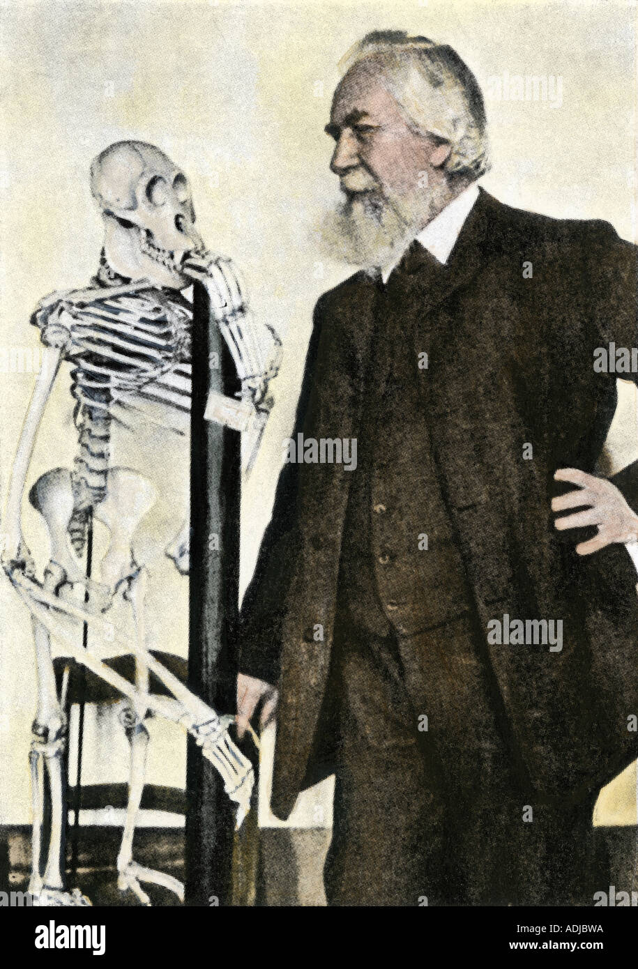 Il professor Ernst Haeckel con un'ancestrale scheletro umano a Jena circa 1900. Colorate a mano i mezzitoni di una fotografia Immagini Stock