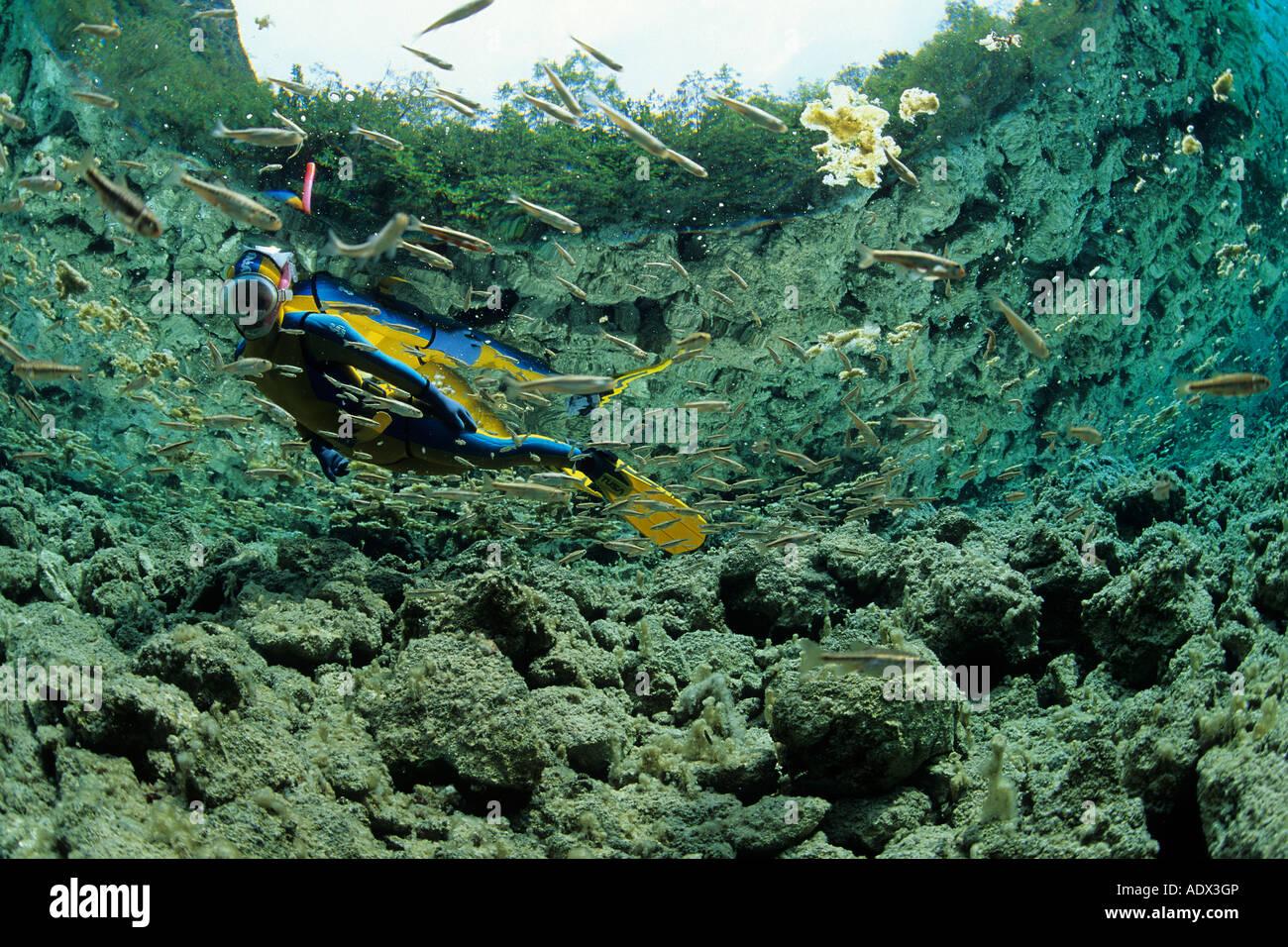 Sommozzatore osservare il novellame di pesci del lago di Cornino Friuli Italia Immagini Stock