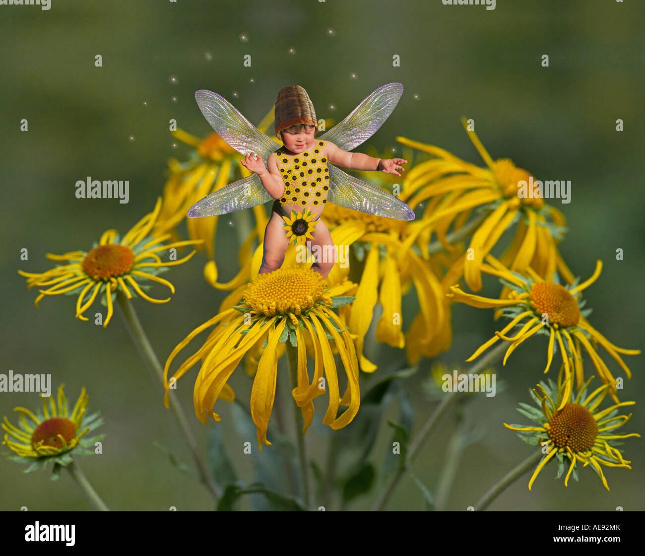 Un fiore fata su sneezeweed Immagini Stock