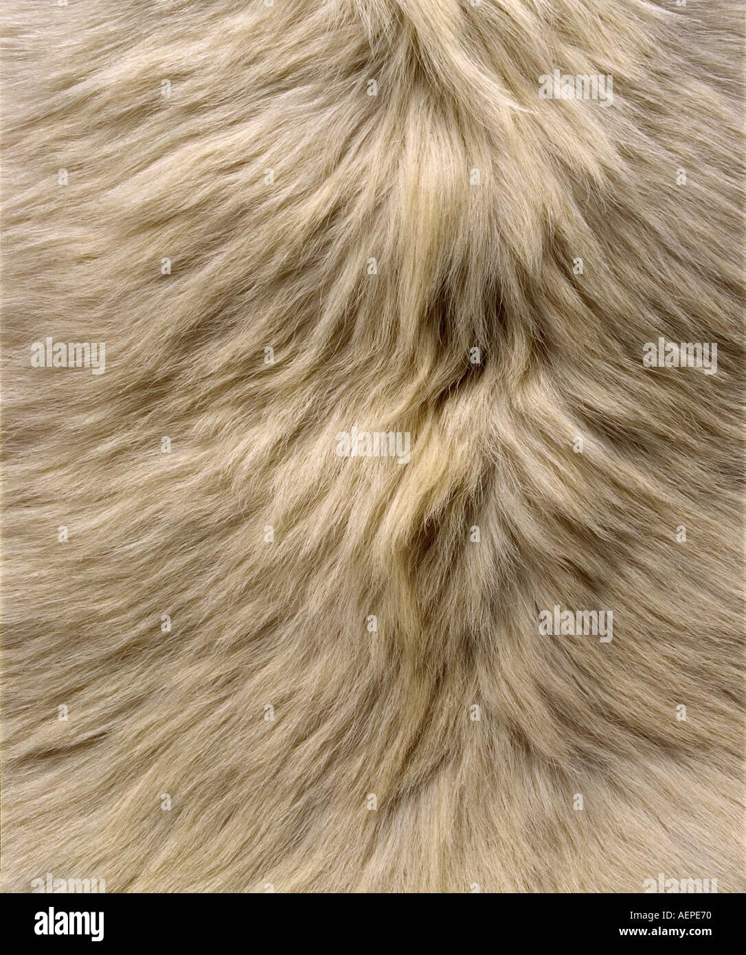 Bianco Naturale pelle di capra cinese Immagini Stock