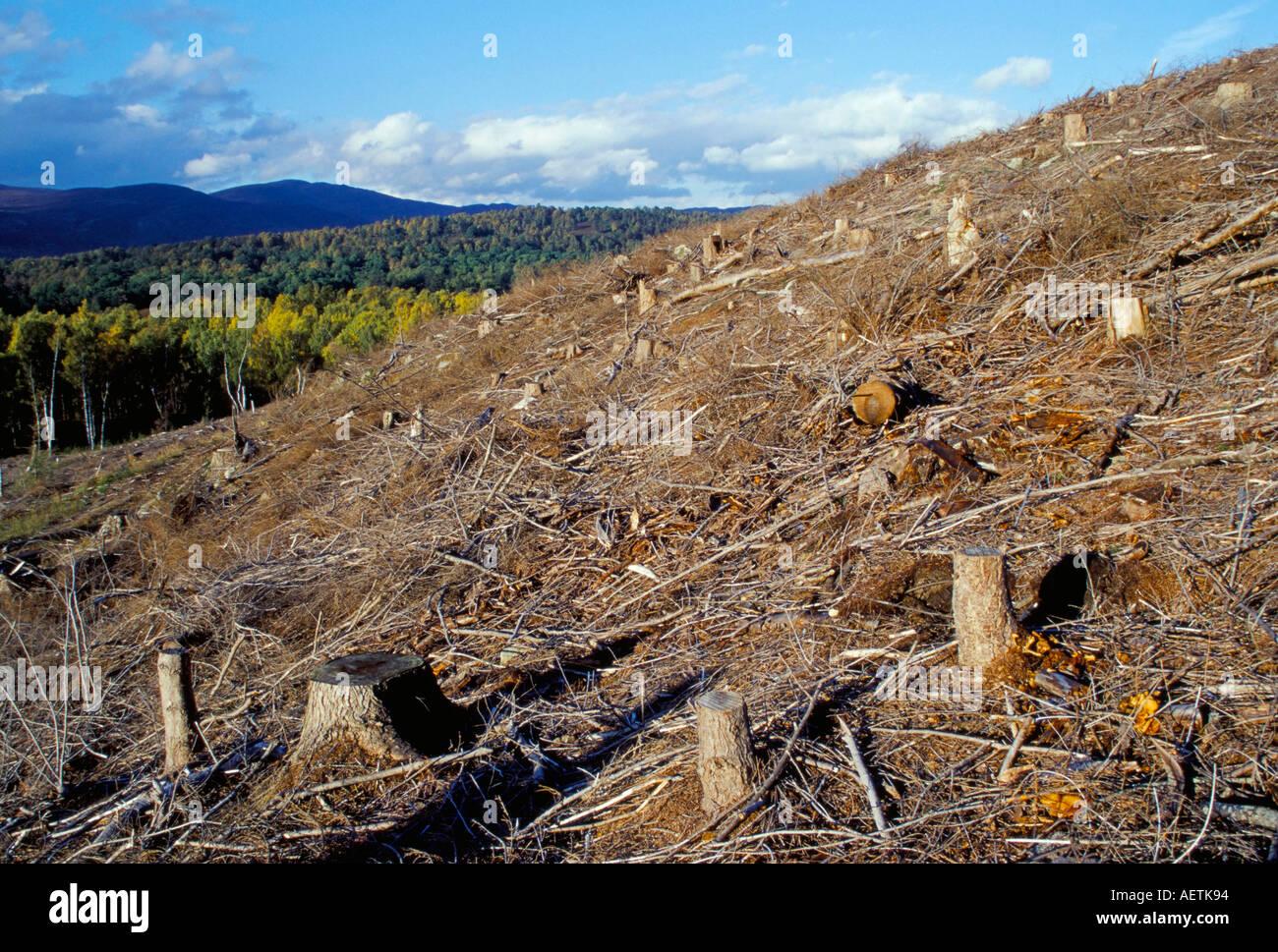 Area di disboscamento vicino a Aviemore Highlands della Scozia Regno Unito Europa Immagini Stock