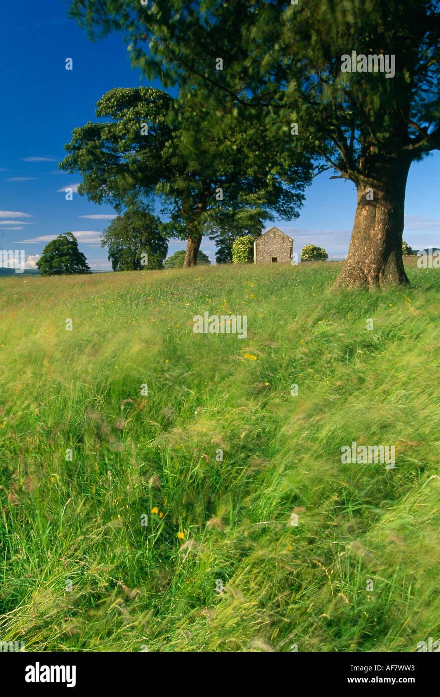 Fienile in campo nei pressi di Bakewell picchi District National Park Derbyshire England Regno Unito Immagini Stock