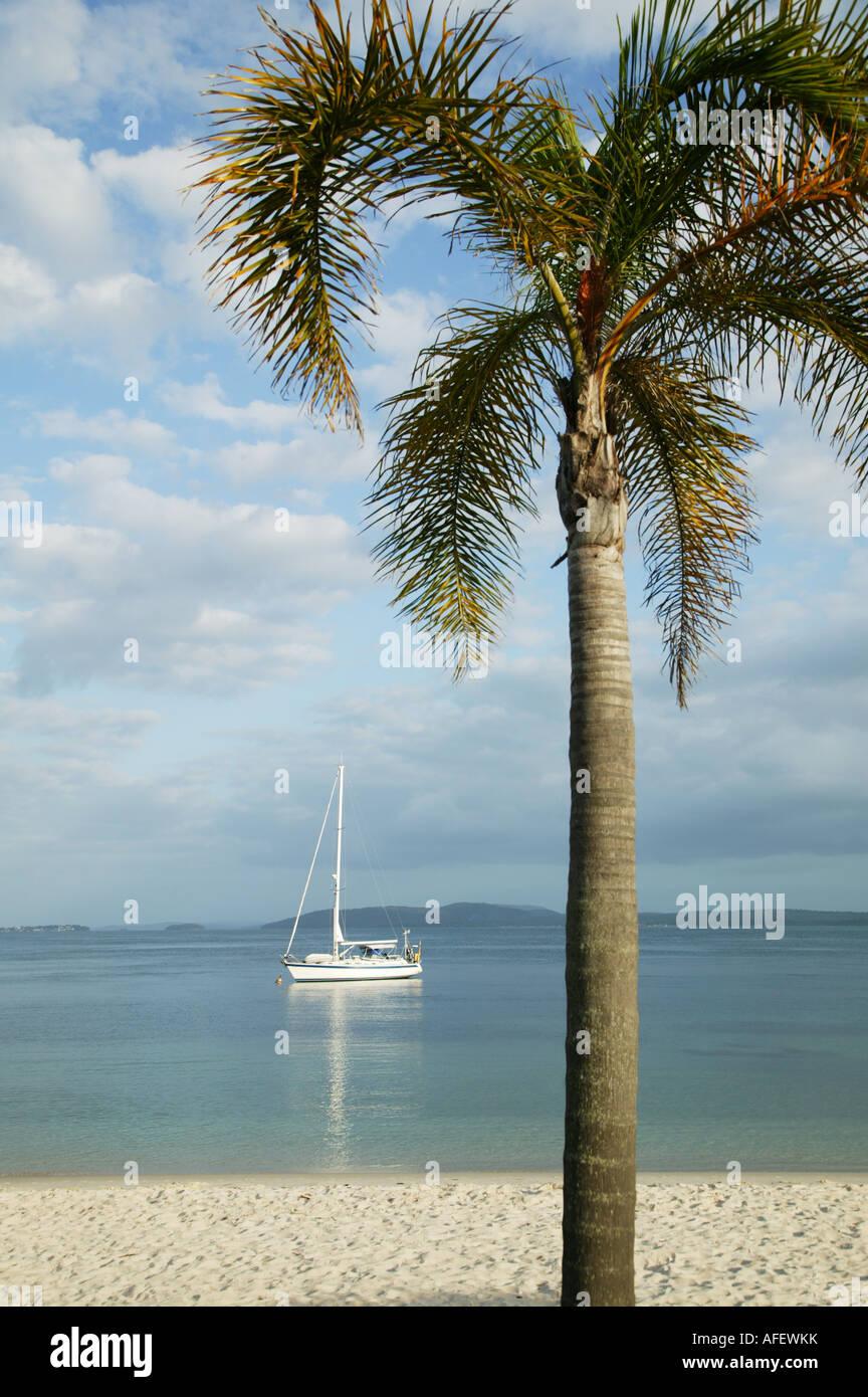 Uno Yacht incorniciata da un albero di palme che sono ancorate al largo di Nelson Bay NSW Australia Immagini Stock