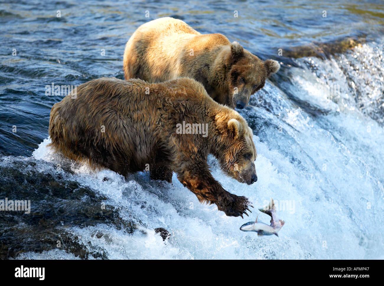 Orso bruno la pesca Brooks Falls Katmai National Park in Alaska Immagini Stock
