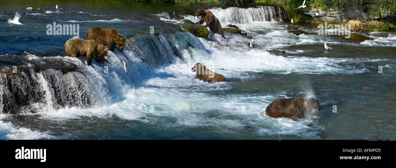 Gruppo di orsi bruni pesca Brooks Falls Katmai National Park in Alaska Immagini Stock