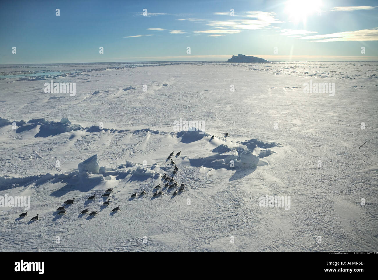 Vista aerea di pinguini imperatore sul loro modo torna alla colonia Cape Washington Antartide Immagini Stock