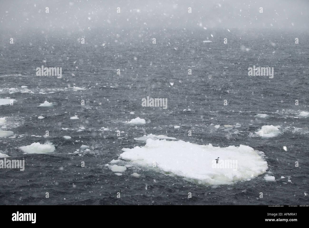 Iceberg con un'Adelie penguin in una bufera di neve Antartide Immagini Stock