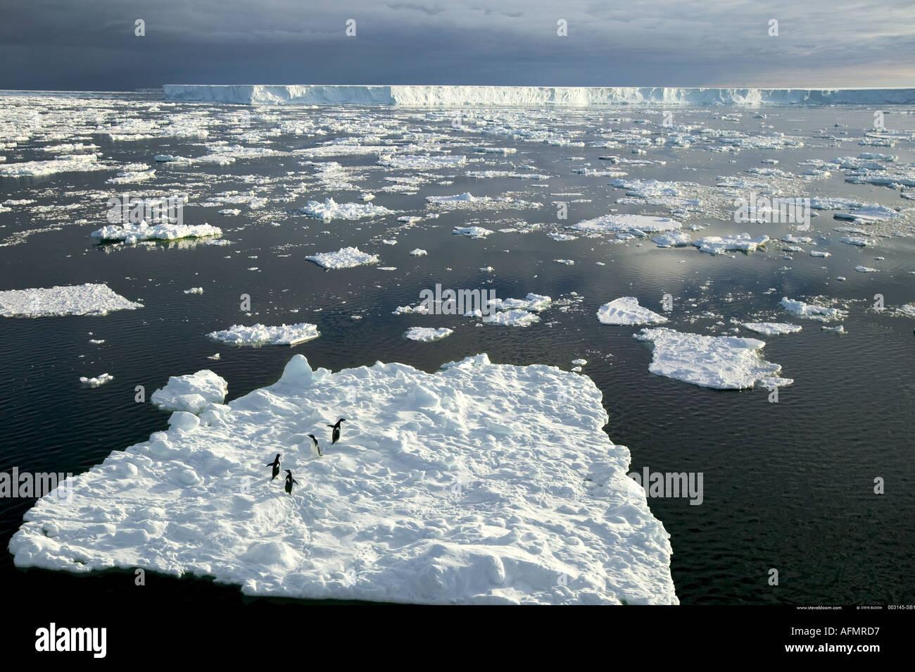 Adelie penguins on ice floe davanti a B 15 il mondo s più grande iceberg Antartide Immagini Stock
