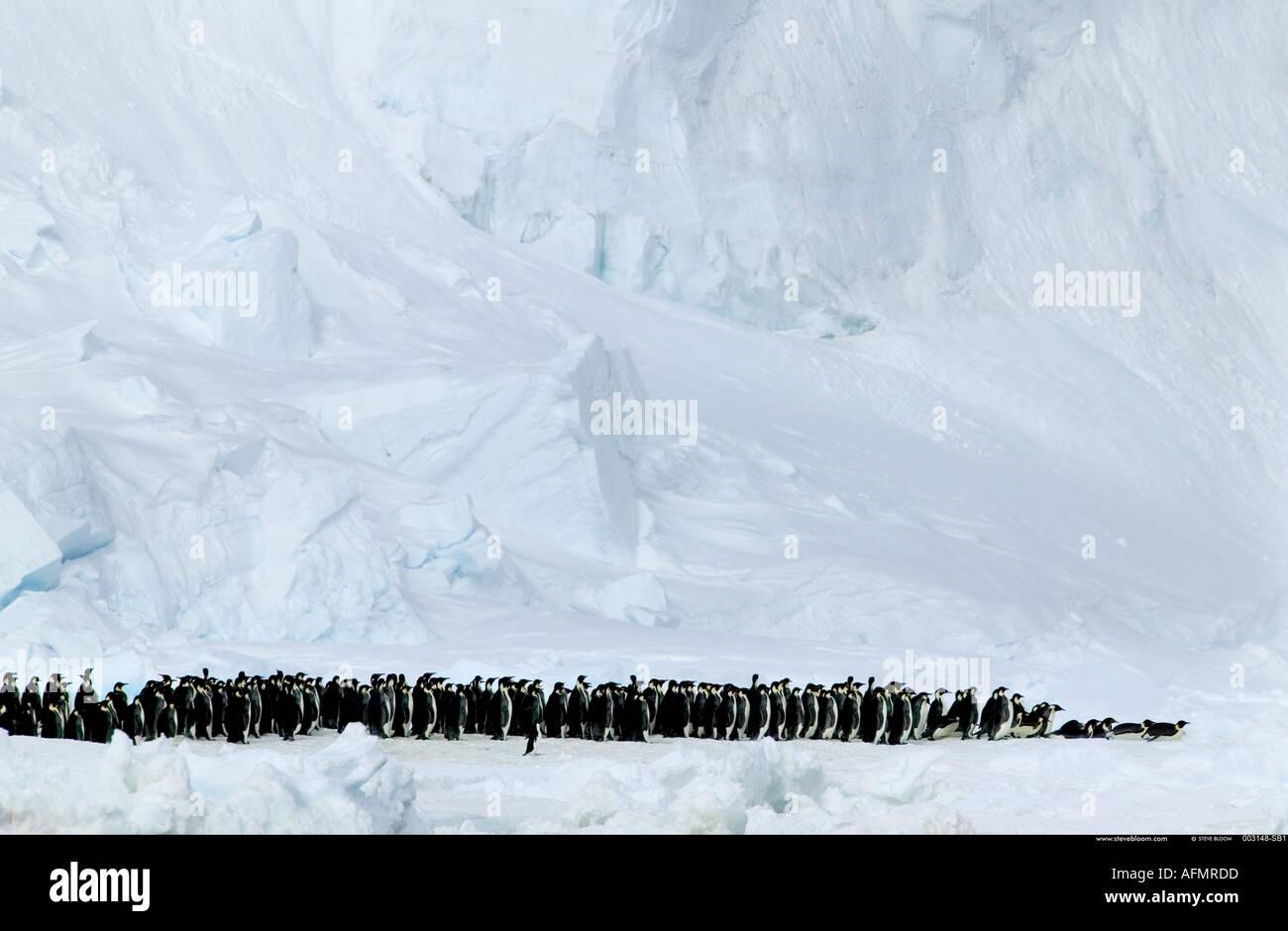 Pinguini imperatore marciano e uno Adelie Penguin Coulman Island Antartide Immagini Stock
