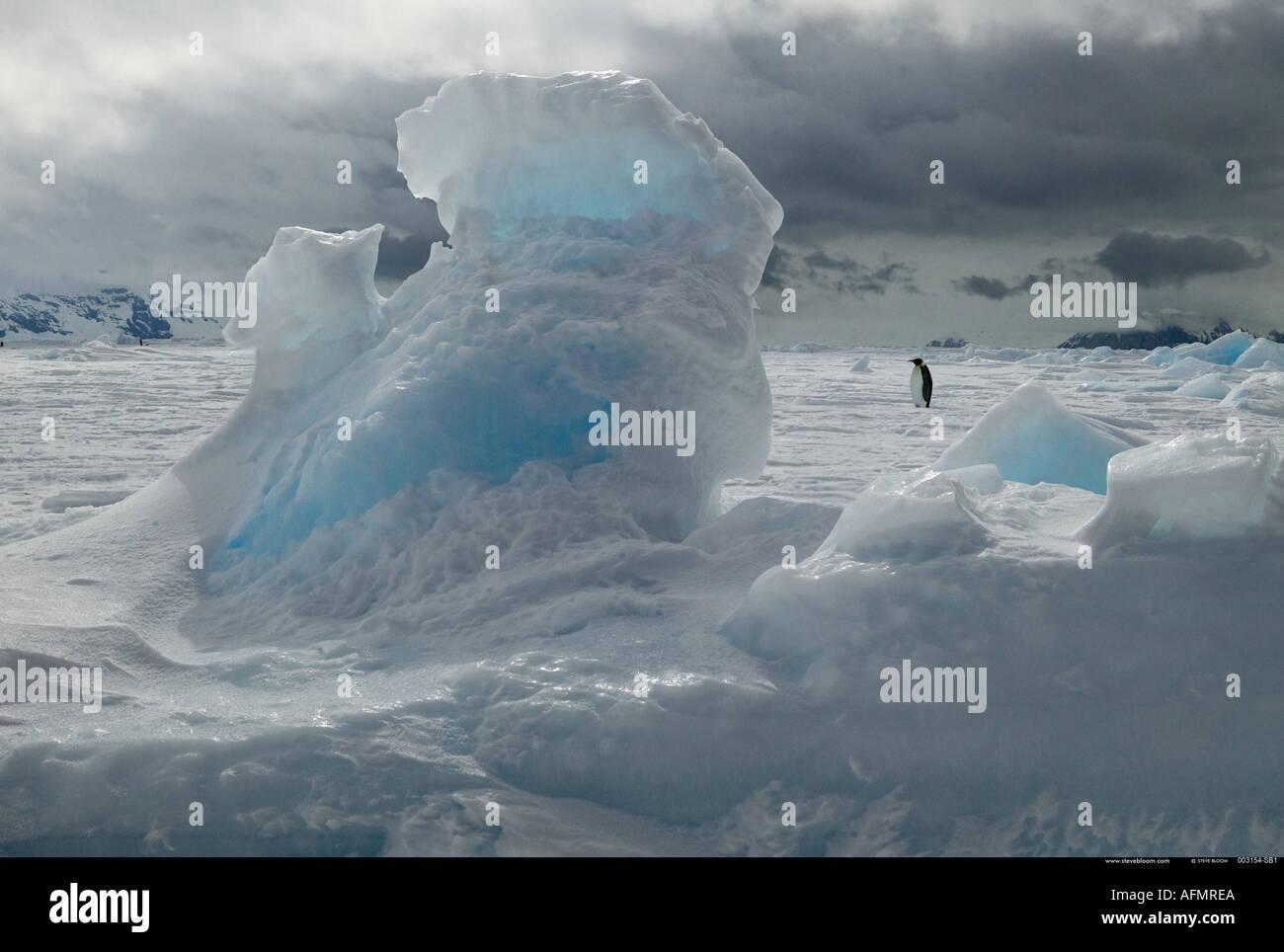 Pinguino imperatore sull Isola di Coulman Antartide Immagini Stock