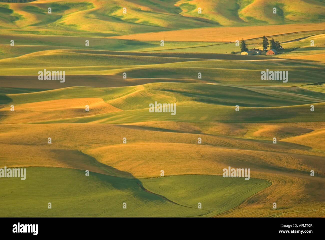 Palouse Campo di grano wheatfilds stato di Washington orientale Immagini Stock