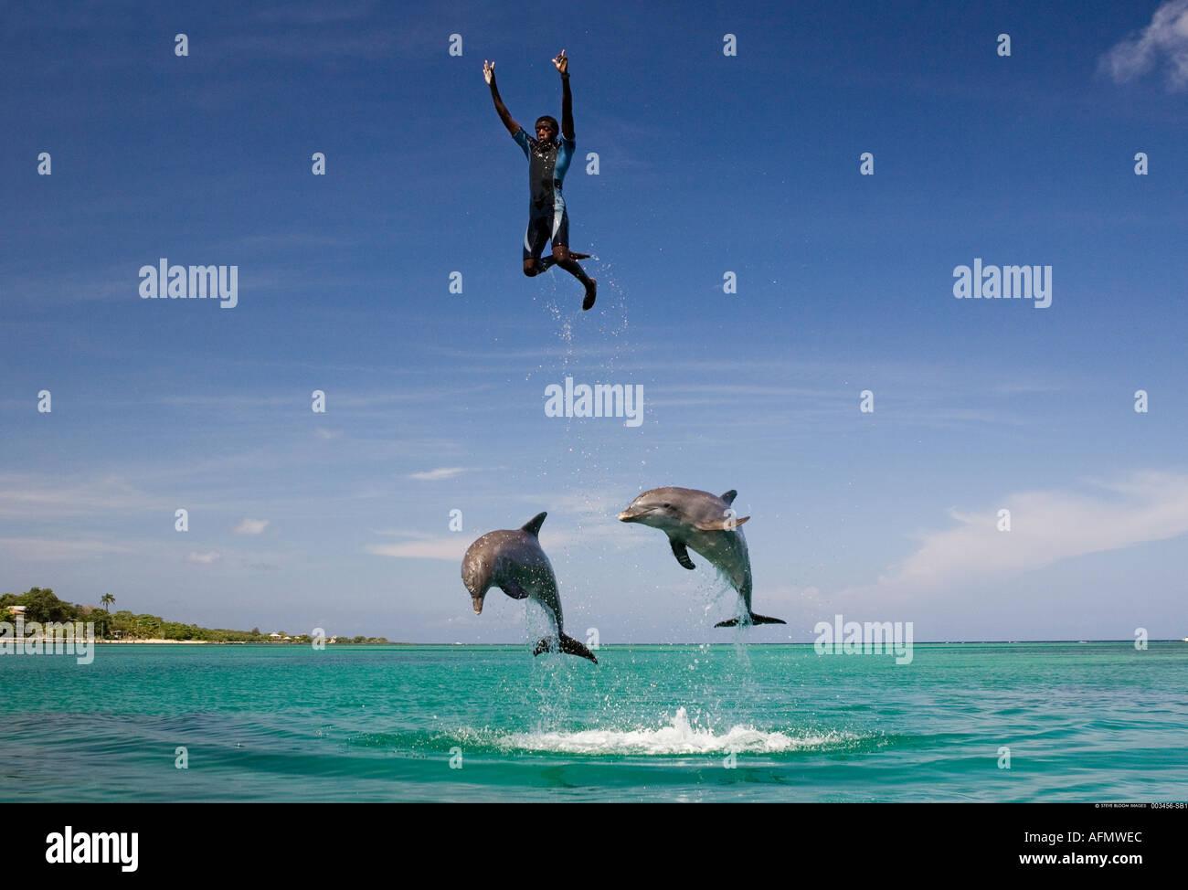 Trainer gettato in aria da delfini Honduras Foto Stock