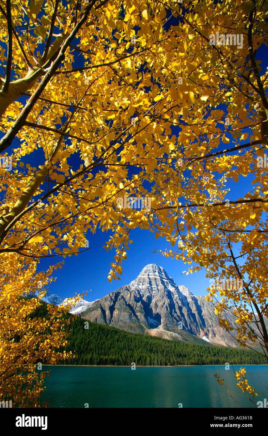I colori autunnali con il Monte Chephren a uccelli acquatici Lago di Parco Nazionale di Banff Alberta Canada Immagini Stock