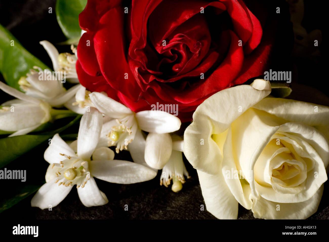 Delicato Ancora In Vita Con Una Rosa Rossa Uno Bianco E Un Mazzo Di