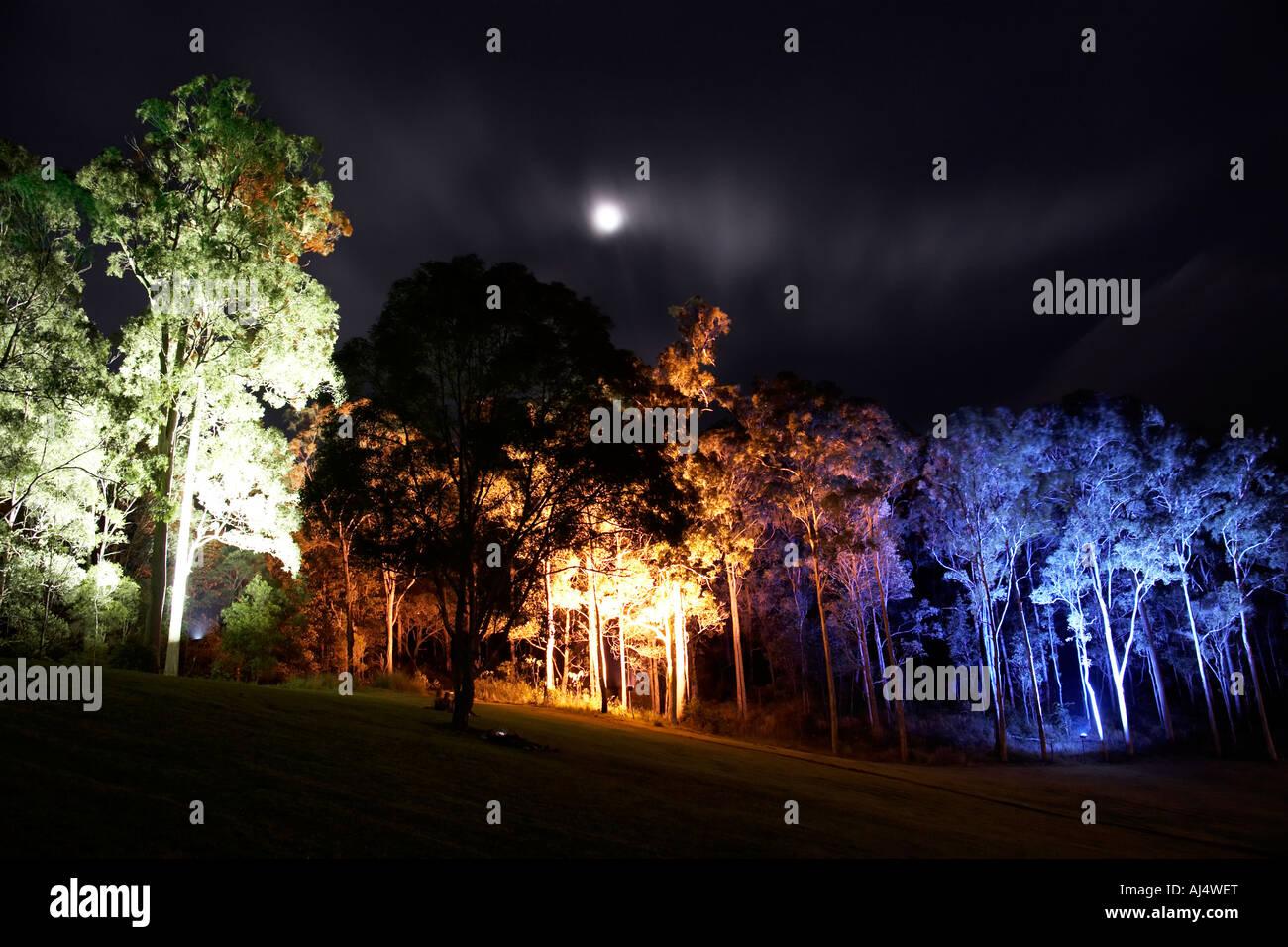 Alberi intorno stadio notte illuminata da luci colorate da walter