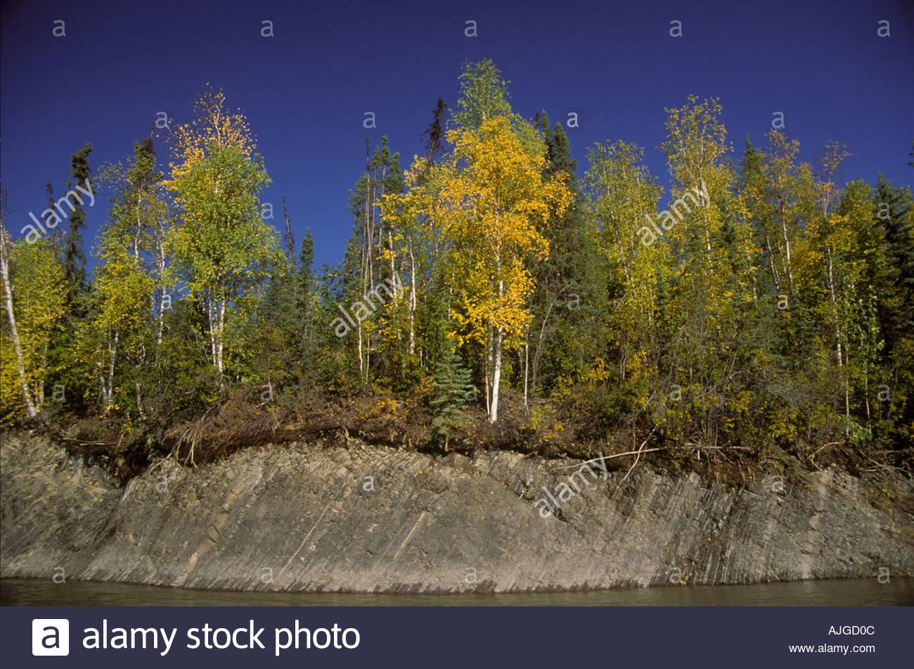 La foresta boreale colori autunnali di abete rosso betulla - Immagine di terra a colori ...
