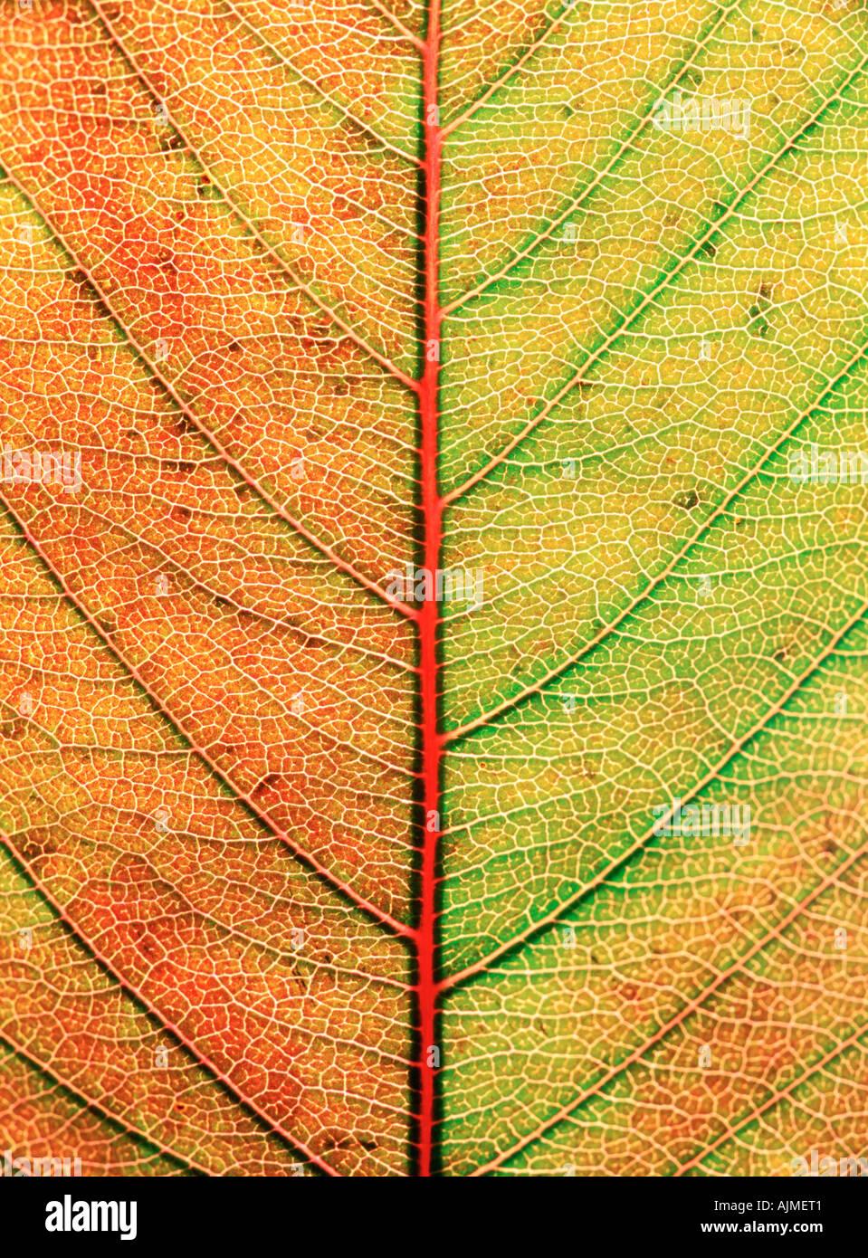 Primo piano di foglie di autunno Immagini Stock