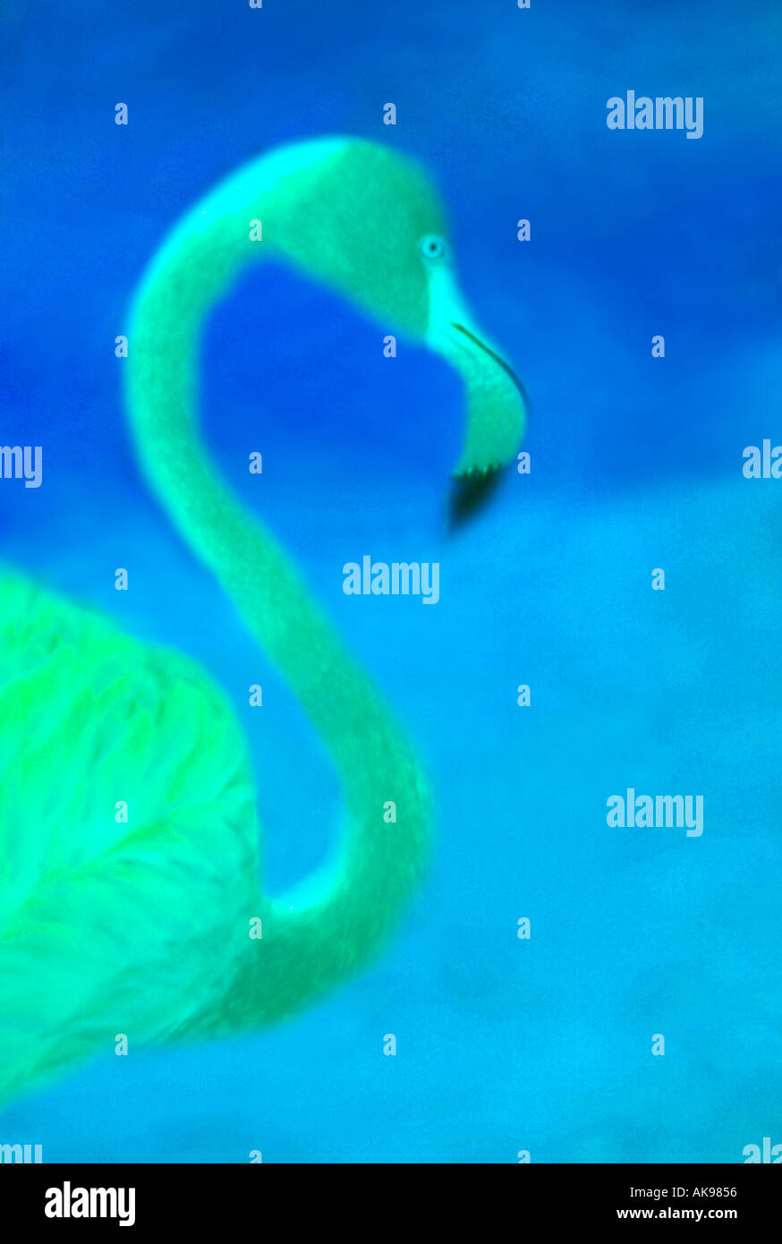 Acquarello del fenicottero verde Immagini Stock