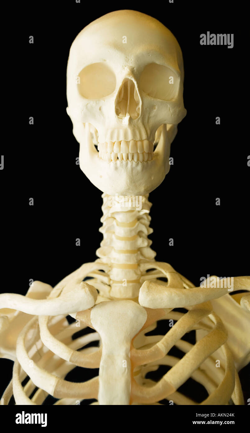 Scheletro umano Immagini Stock