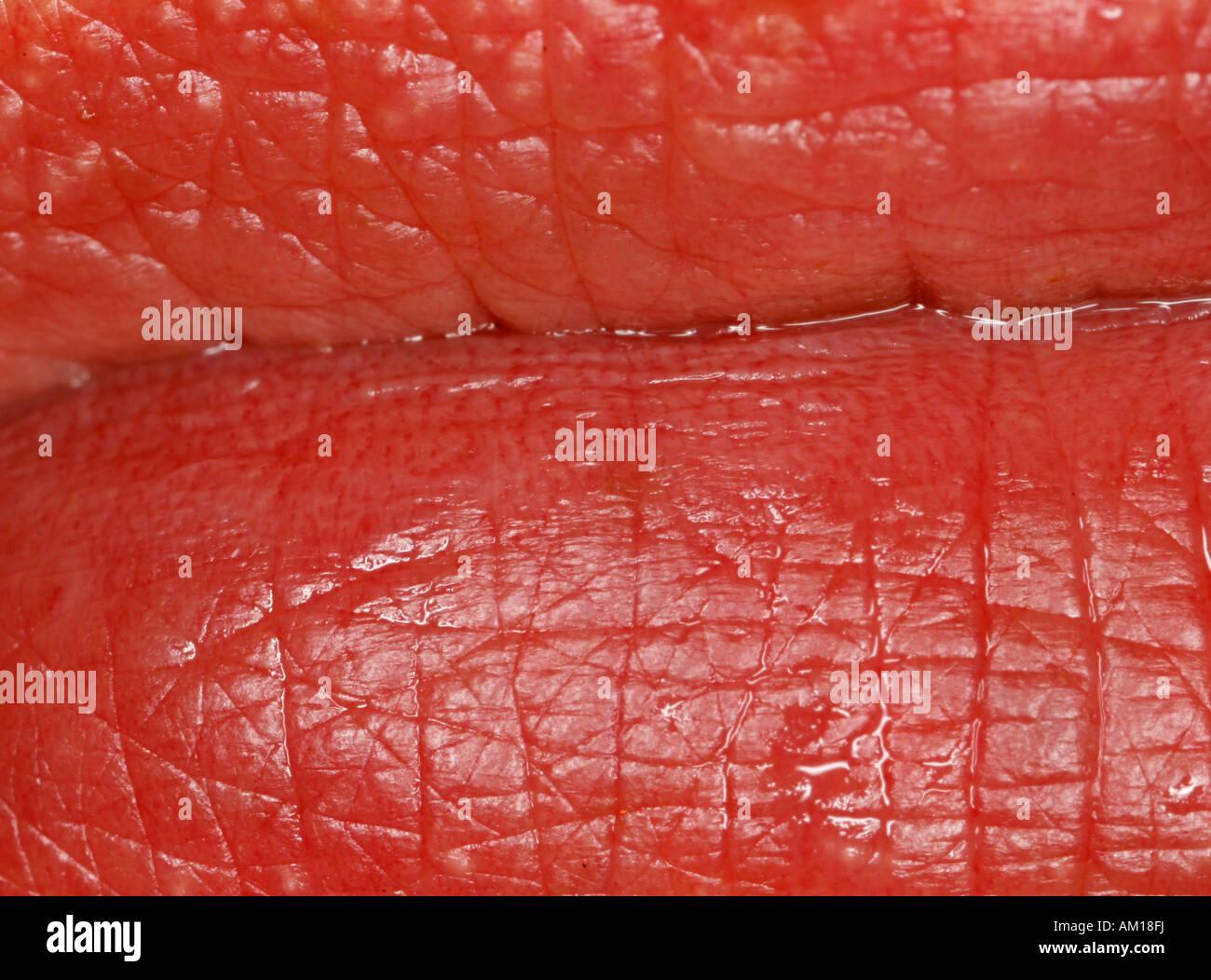 Extreme close-up di labbra umane Immagini Stock