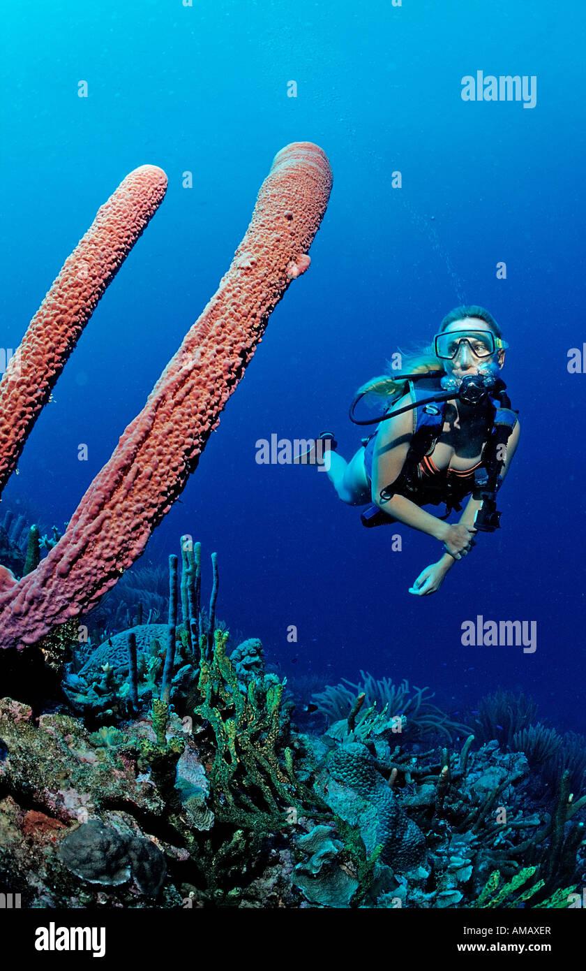 Scuba Diver e tubo da stufa di lavanda spugna Aplysina archeri Martinica Antille Francesi Mar dei Caraibi Immagini Stock