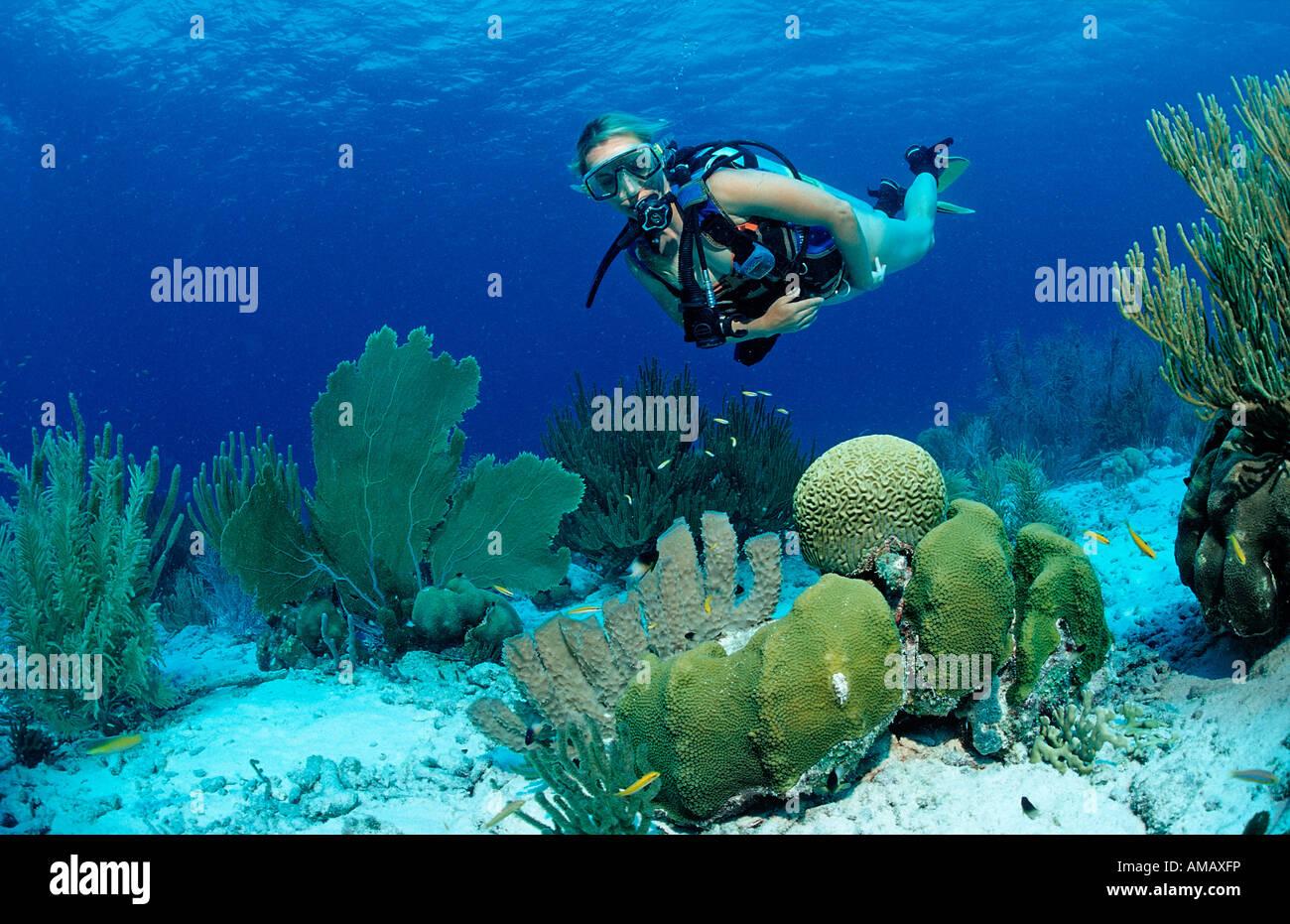 Scuba Diver e barriera corallina Antille Olandesi Bonaire Mar dei Caraibi Immagini Stock