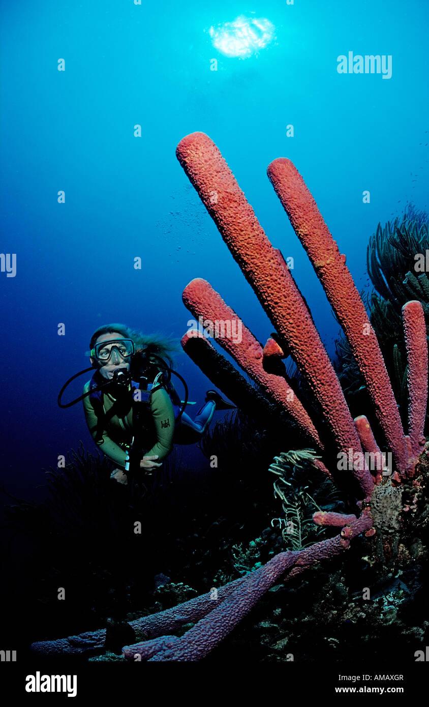 Scuba Diver e tubo da stufa di lavanda spugna Aplysina archeri Guadalupa French West Indies Mar dei Caraibi Immagini Stock