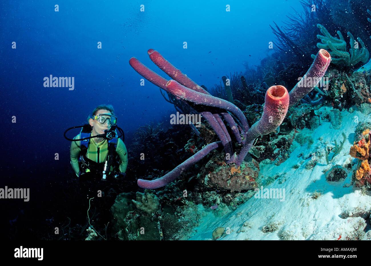 Scuba Diver e tubo da stufa di lavanda spugna Aplysina archeri Antille Olandesi Bonaire Mar dei Caraibi Immagini Stock