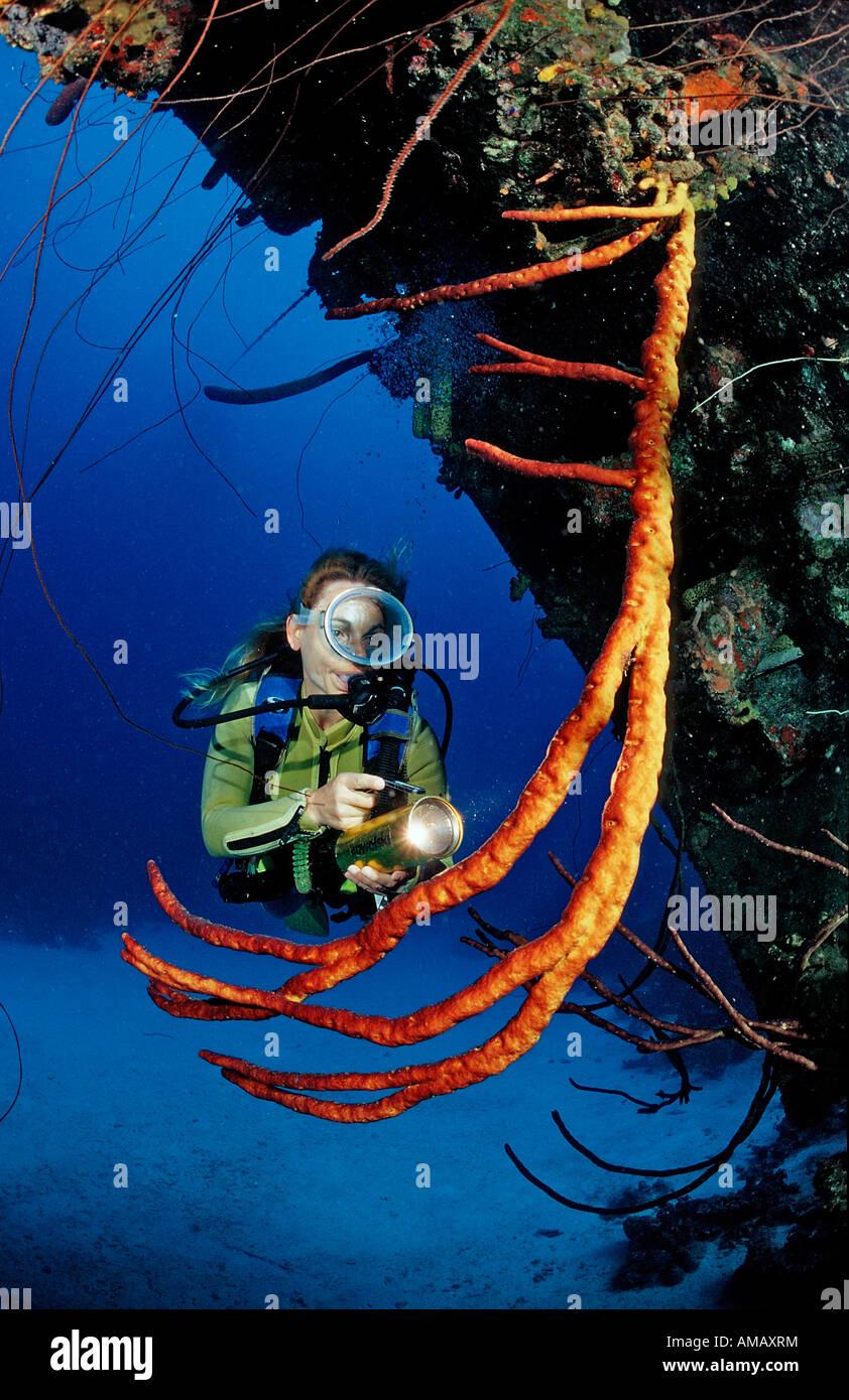 Scuba Diver sul Hilma Hooker nave relitto Antille Olandesi Bonaire Mar dei Caraibi Immagini Stock